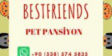 Can Dostlarınıza İş Nedeniyle Ayıramadığınız Vakti Sevgiyle Ayıran Dost Canlısı Bir Pansiyon..