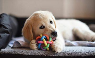 Köpeğinize Oyuncak Seçerken Nelere Dikkat Etmelisiniz?