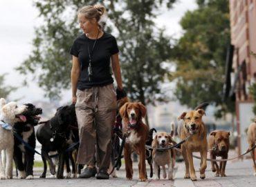 Köpek Gezdirme İşi