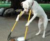 Köpek Gezdirme İlanları