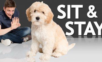 Yeni Trend: Köpek Gezdirme Hizmeti