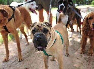 Köpek Bakıcısı İş İlanları
